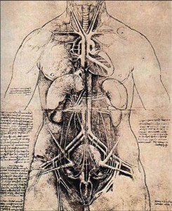 DaVinci Anatomy Drawing. *The human intestines are about 25' long.